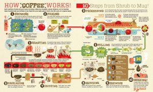 Process du café de manière simplifiée